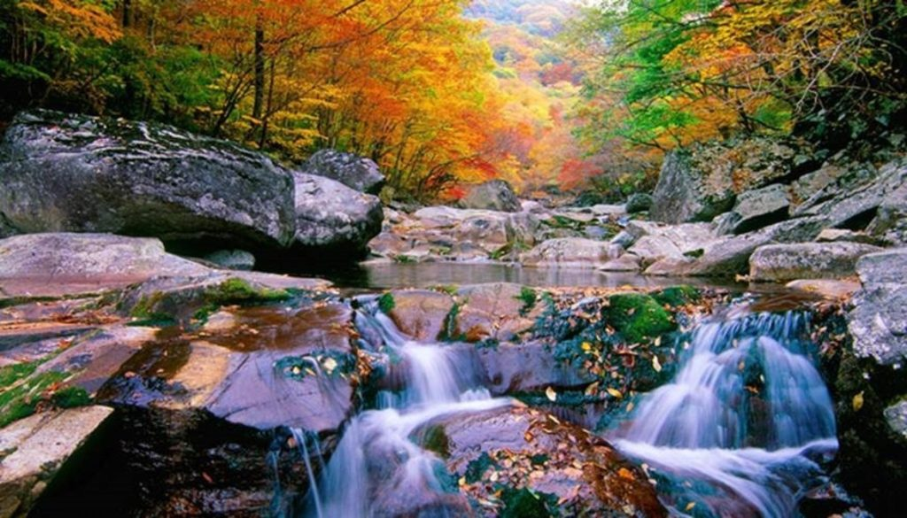 Stunning autumn leaves and nature at Jirisan National Park, South Korea