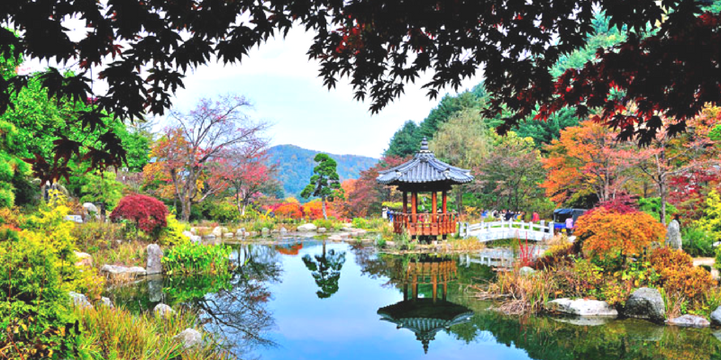 Autumn leaves and Pagoda in the Garden of Morning Calm, Gapyeong, South Korea