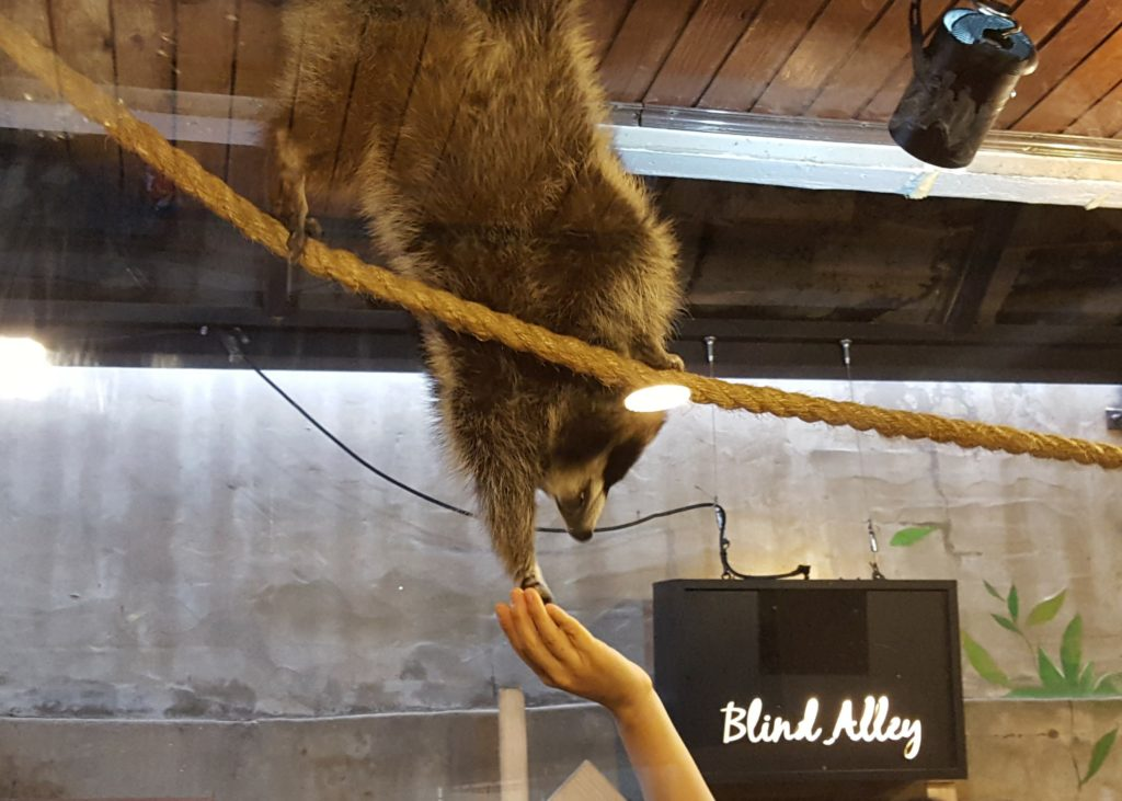 Blind Alley Raccoon Cafe in Seoul, South Korea