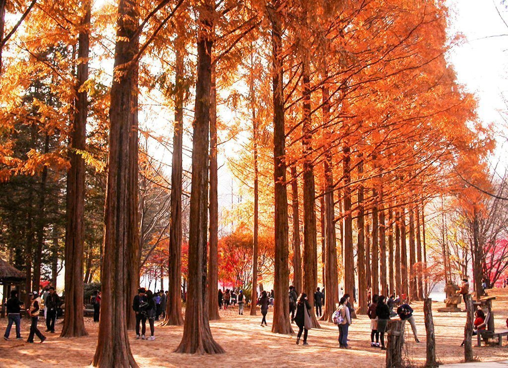 Take a trip to Nami Island and save money in Seoul