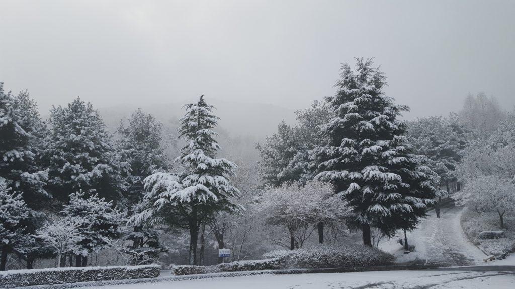 Snowy scenes during winter in Korea