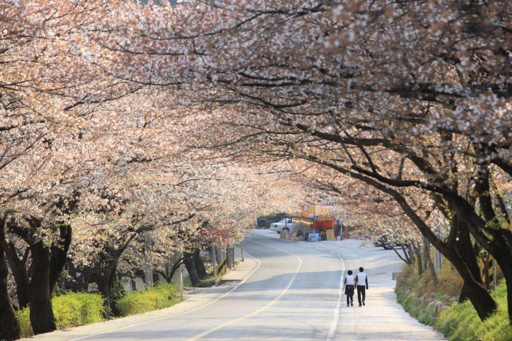 Hwagae Market, where to see cherry blossoms in Korea near Jirisan