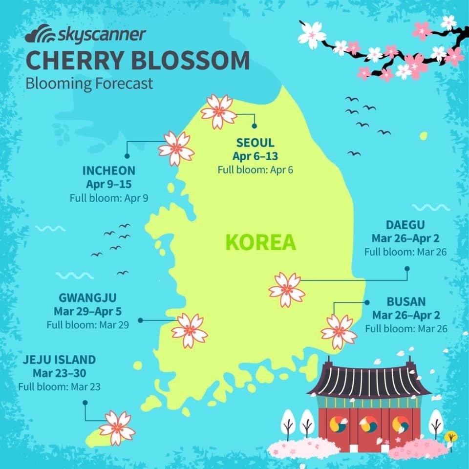 Cherry Blossom In Korea Forecast 2020