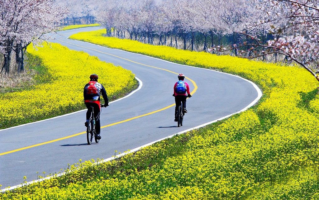 Beautiful roads on Jeju Island