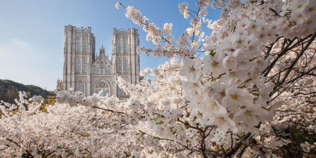 Kyunghee University is a lovely place where to see cherry blossoms in Korea