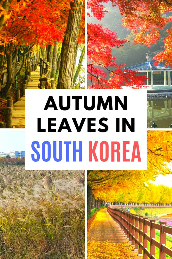 The Best Places To See Autumn Leaves In Korea & Seoul