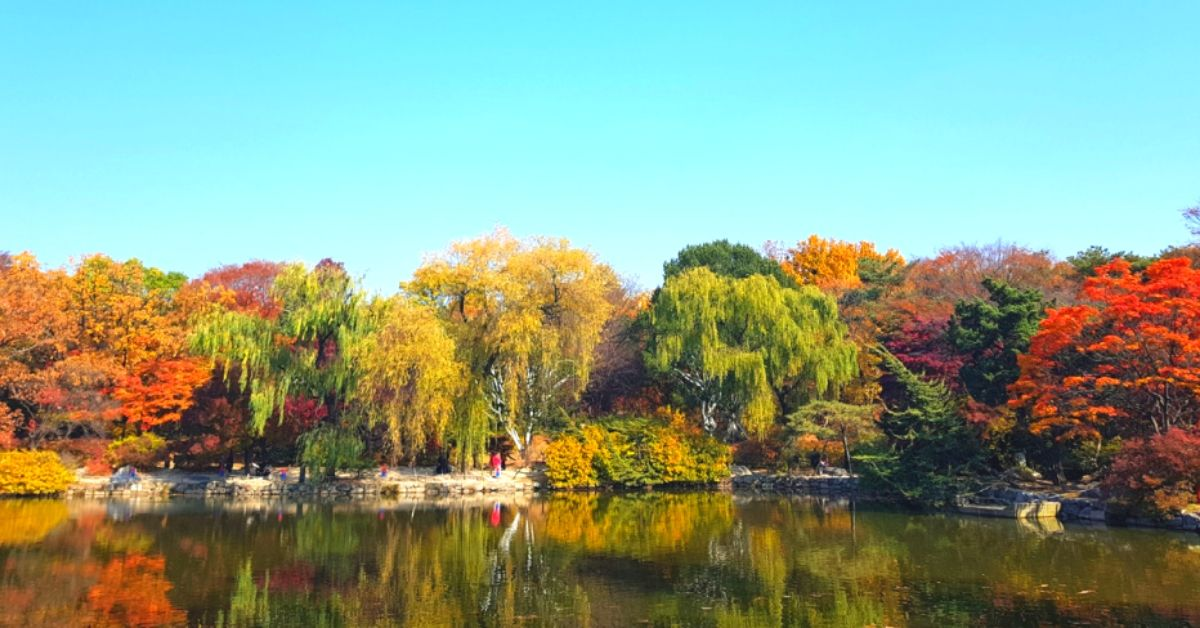 Where To See Autumn Leaves In Korea And Seoul