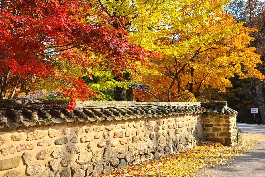Where To See Autumn Leaves In Korea & Seoul