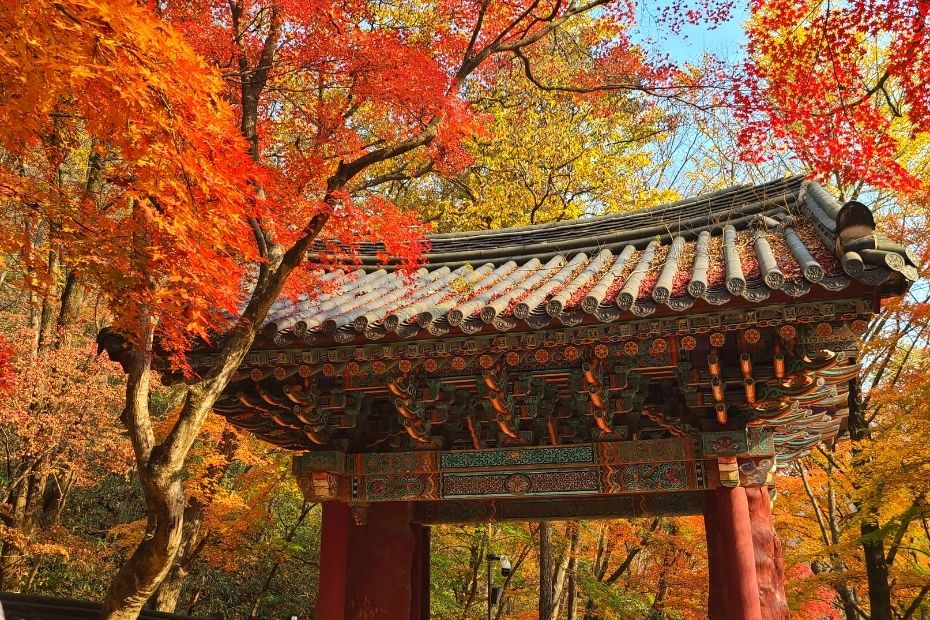 Autumn Leaves in Naejangsan National Park, Koreax