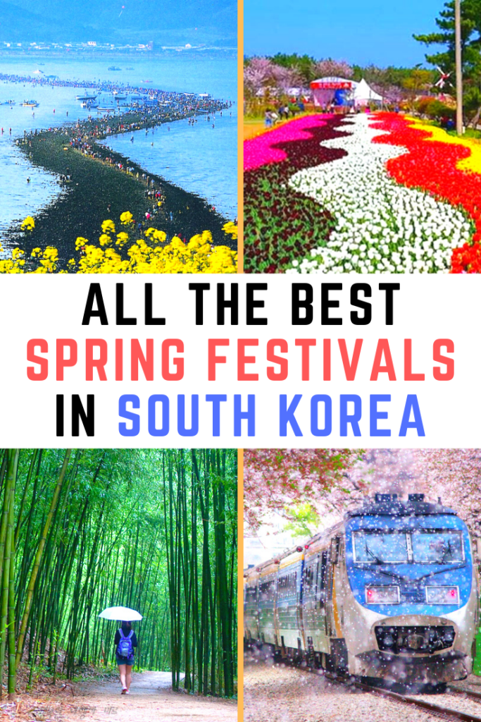 Spring Festivals In Korea Pinterest Pin 2