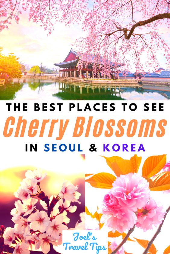 Best Places To See Cherry Blossoms In Korea & Seoul Pin 2