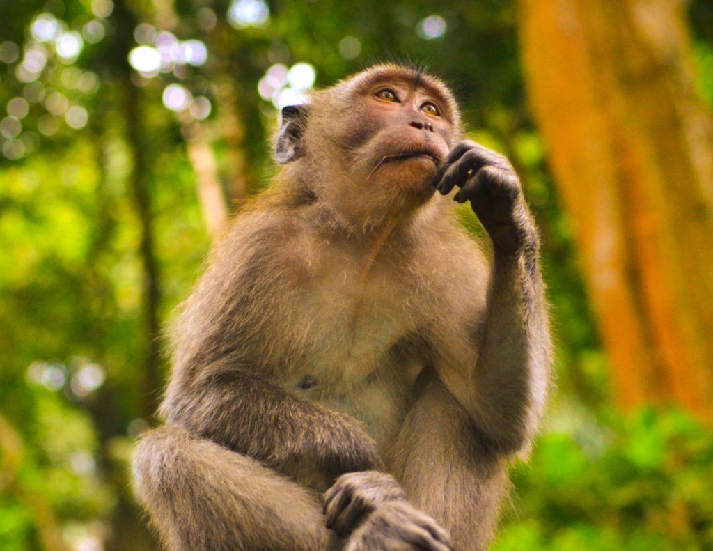 What should I do? Thinking monkey