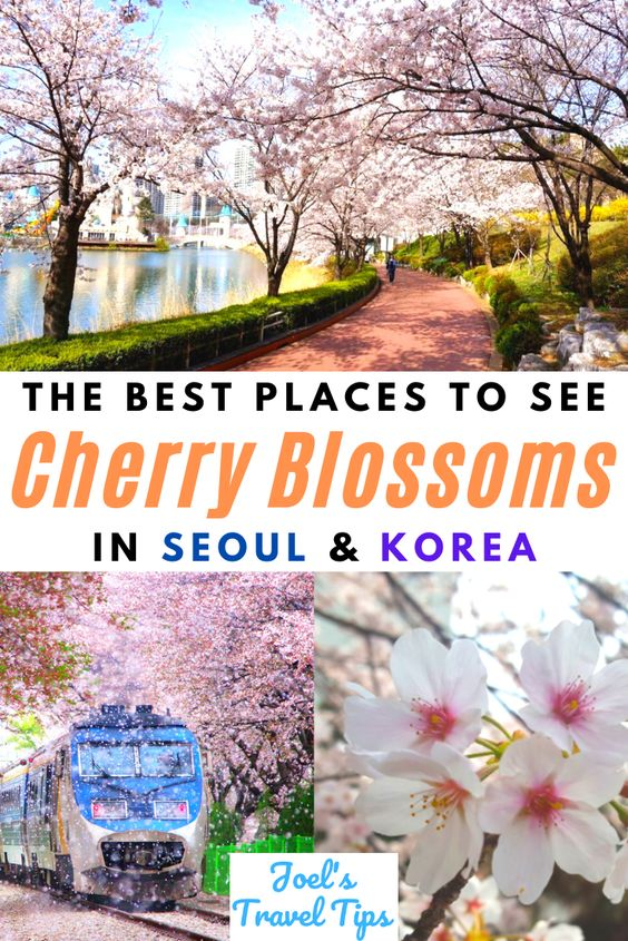 Best Places To See Cherry Blossoms In Korea & Seoul Pin 3
