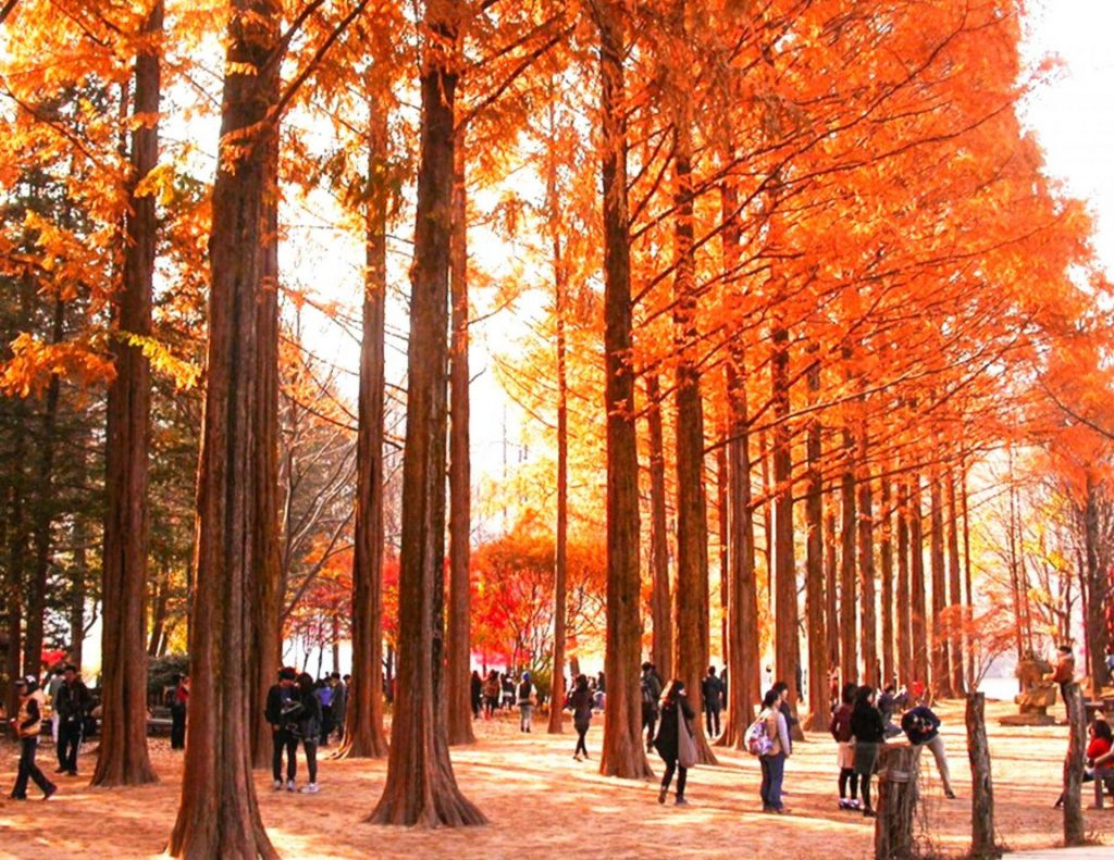 Nami Island is a great day trip from Seoul