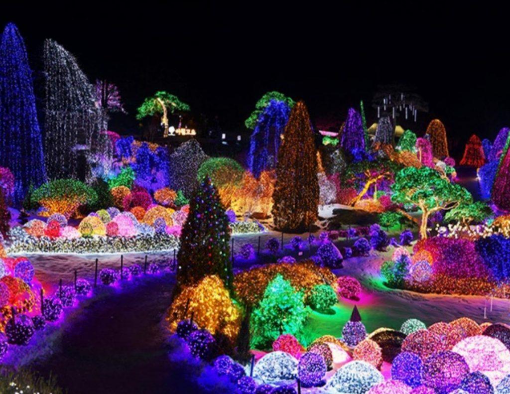 Winter illuminations during winter festivals in Korea
