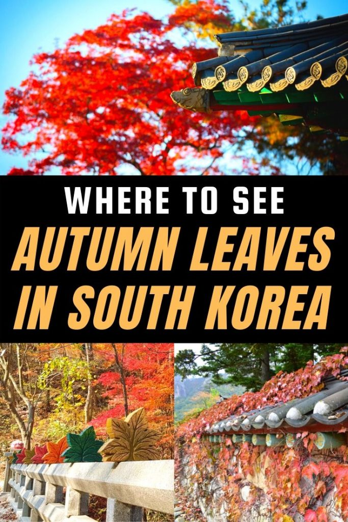Where To See Autumn Leaves In Korea