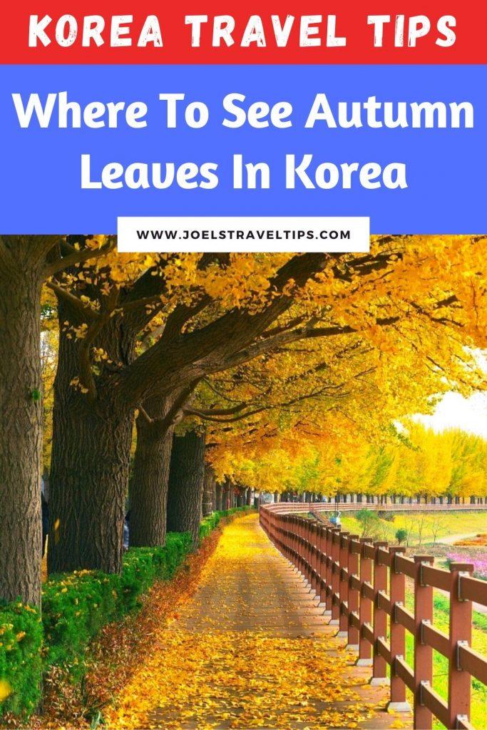 Korea Travel Tips: Where to see autumn leaves in Korea