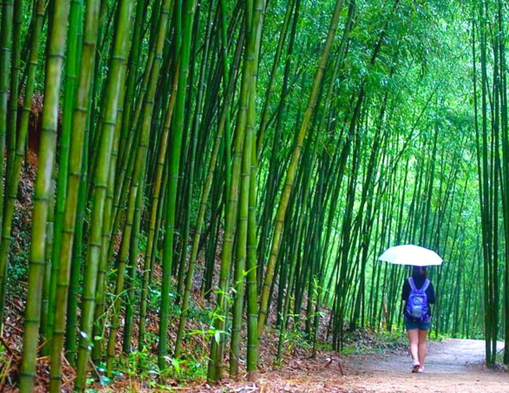 Damyang Bamboo Forest - a great day trip from Seoul