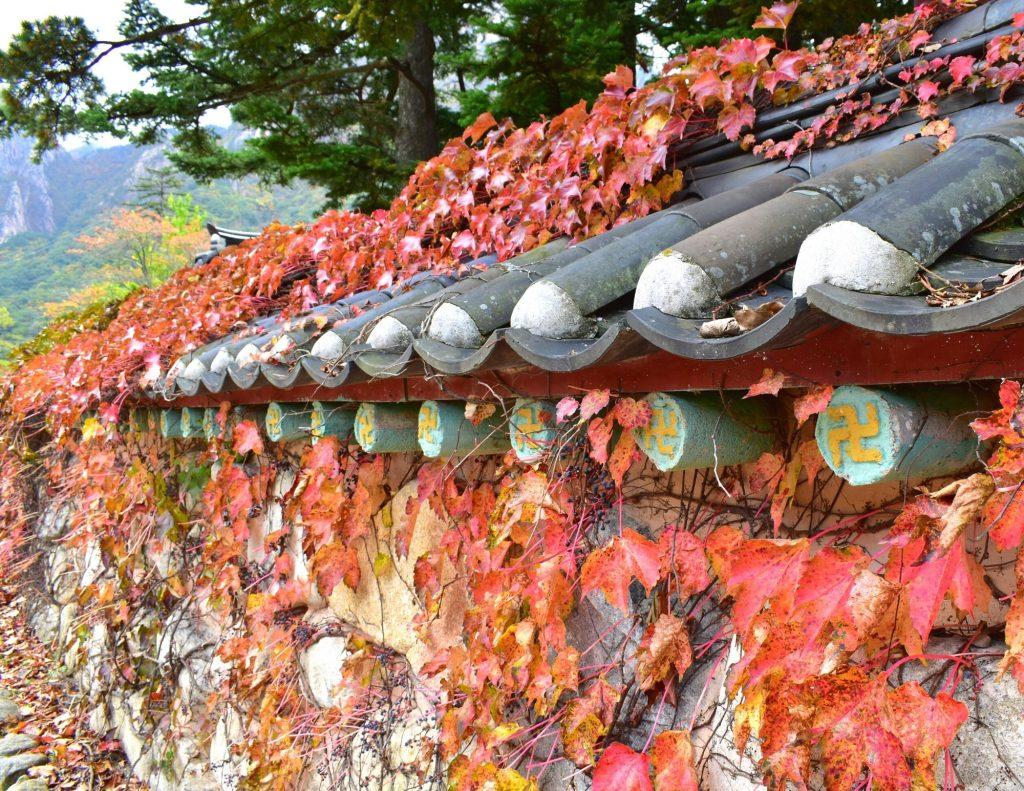 Autumn leaves at Seoraksan National Park in Korea