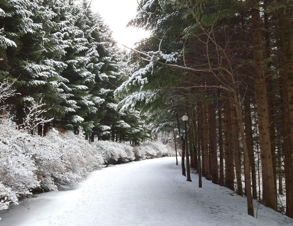 Snowy tree-lined streets in Korea