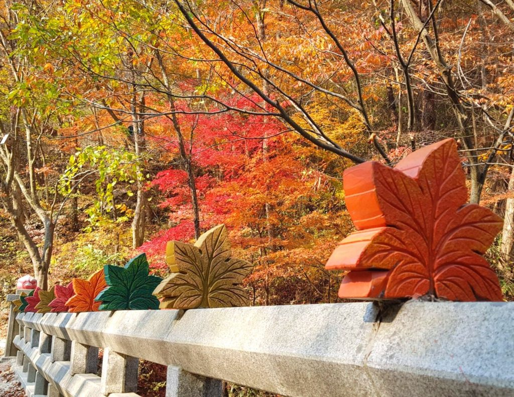 A bridge of autumn leaves in Korea's national parks