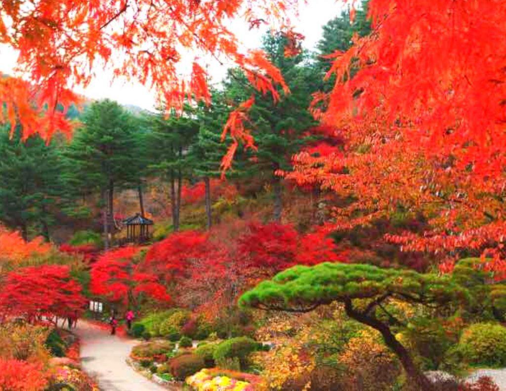 Red fall foliage at the Garden of Morning Calm, Korea