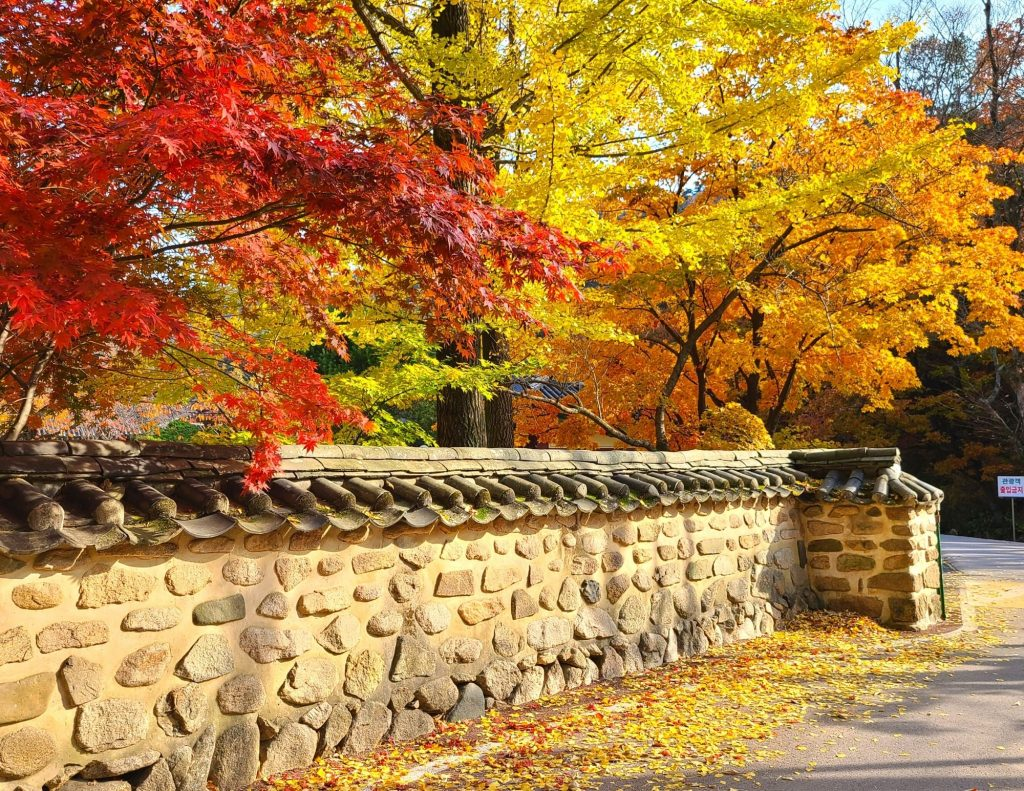 Stone wall with autumn leaves at a Korean Buddhist Temple in Korea