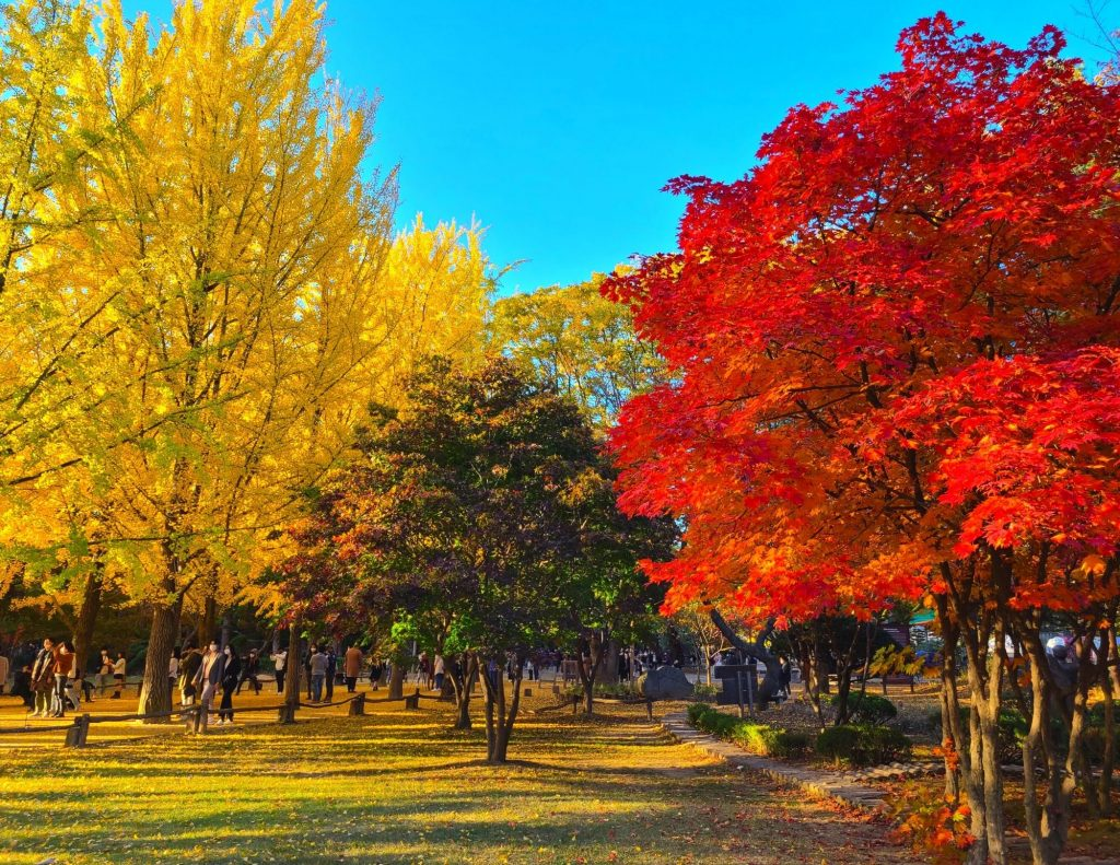 Beautiful autumn leaves with yellow and red leaves and blue skies