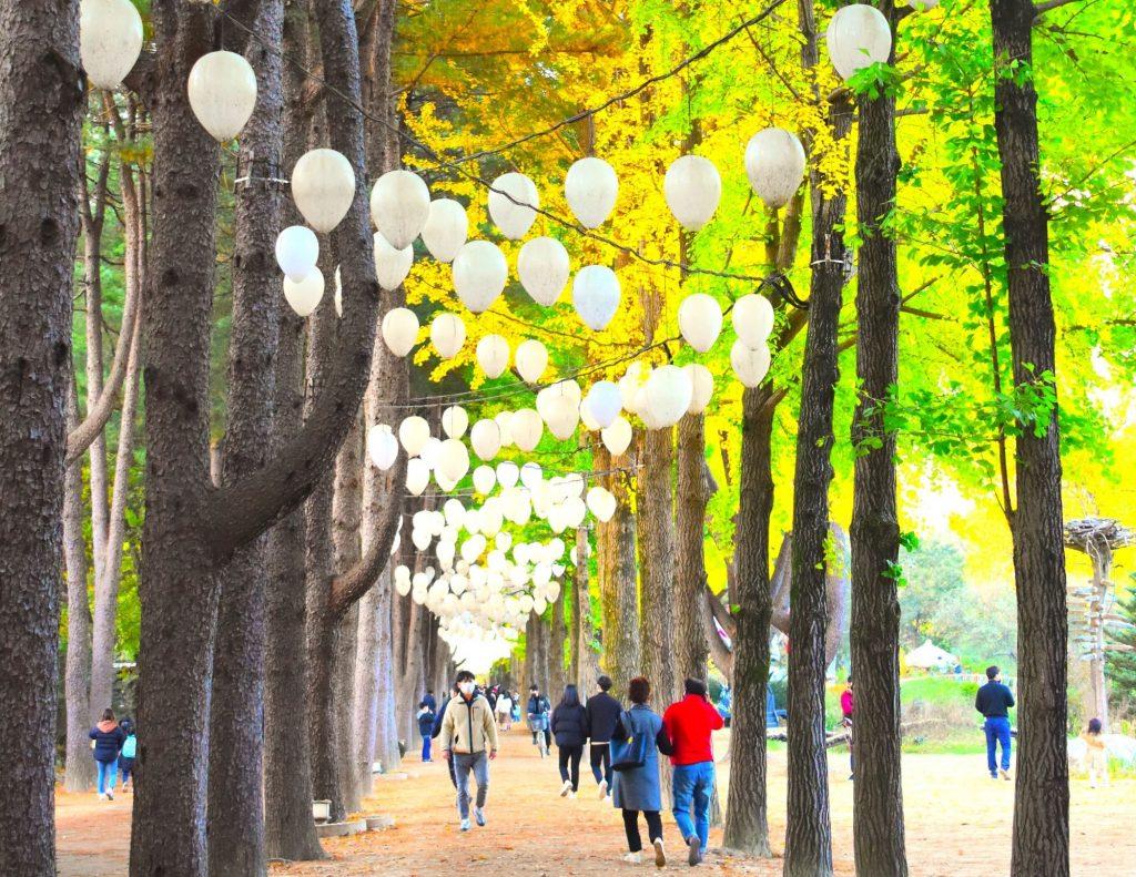 Famous tree lined street on Nami Island, Korea