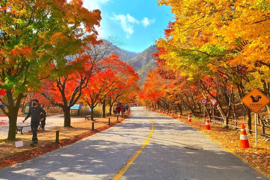 Maple Tree Road at Naejangsan National Park is one of the best places to see autumn leaves in Korea